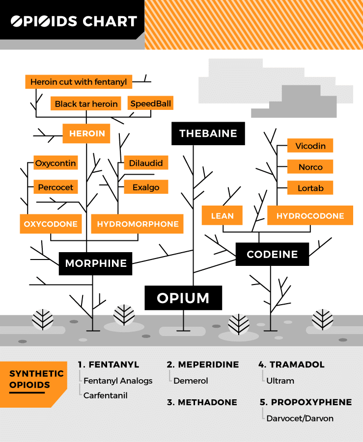 This Chart Depicts How Common Opioids Are Related