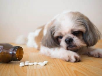 Some Opioid-Abusing Owners Are Taking Pills Originally Intended As Pet Prescriptions